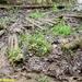 2009_04_19 Honnay 34