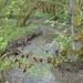 2009_04_26 Romedenne 28