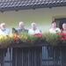 0021 precies de koninklijke familie op het balkon!
