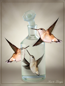 vogels in glas