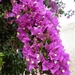 2009_05_31 San Pellegrino 83