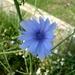 2009_05_31 San Pellegrino 88
