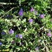 2009_05_31 San Pellegrino 90