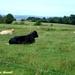 2009_07_12 Feschaux 18