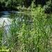 2009_07_12 Feschaux 31 Domaine de Massembre