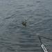20070604-Watersportbaan vissen 028
