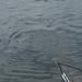 20070604-Watersportbaan vissen 029