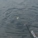 20070604-Watersportbaan vissen 030