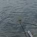 20070604-Watersportbaan vissen 032