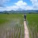 Rijstvelden en Tan Samaai