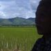 Mijn lokale gids en de rijstvelden