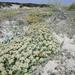 Mallorca - mediterrane flora en fauna