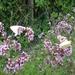 2009_07_25 Vierves-sur-Viroin 16