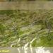 2009_08_09 Dourbes 01 13km 2u25
