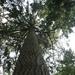 Bomen in de plantage