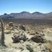 het enige groen tussen de lava zijn cactussen