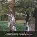 Erbaut fetishboom
