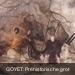 Goyet: Prehistorische grotten