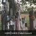 Herchies boom