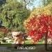 Paradisio chinese tuin 1