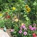 Zonnebloemen en dahlia's