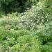 2009-06-29 burg Minolta 014