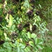 2009_09_20 Kerksken 18
