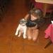 20090731mbl 004 Col Gd St Bernard