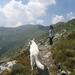 20090801mbl 018 Col Gd St Bernard