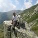 20090801mbl 024 Col Gd St Bernard