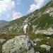 20090801mbl 025 Col Gd St Bernard