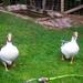 Lawaaierige vogels