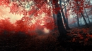 Red-Forest-HD-Wallpaper-25831